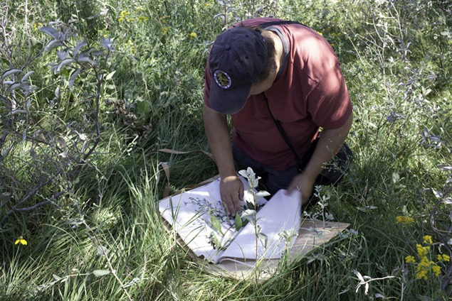 Alexey Collecting on Davis Prairie, August 2011. Photo by Terry Evans.