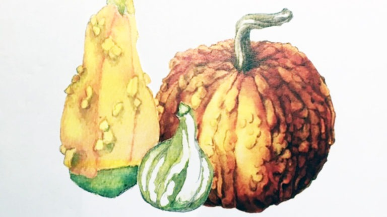 Botanical Illustration: Winter Gourds