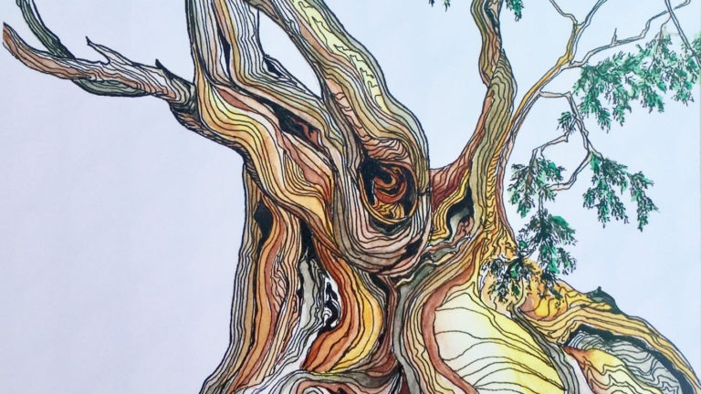 Bristlecone Pine in Ink and Watercolor
