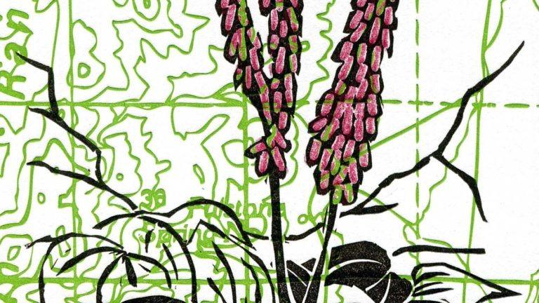 Linocuts: Botanical Blossoms