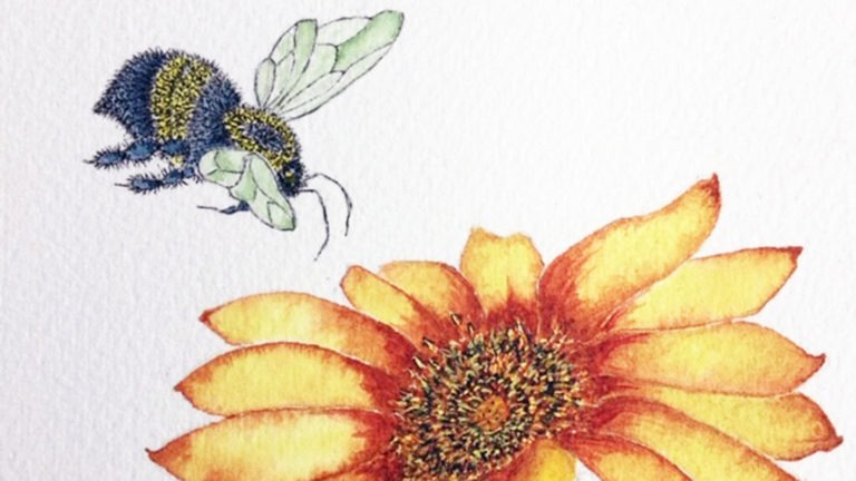 Bugs and Botanicals in Ink and Watercolor
