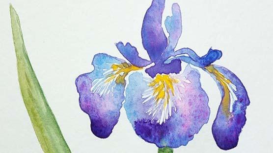 Watercolor: Irises
