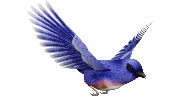Natural Illustration: Birds