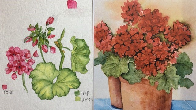 Watercolor Geraniums:  From Studies to Composition
